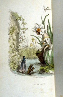 Narcisse, plate opposite p. 115 in the book, Les Fleurs animées (Paris: Garnier Frères, undated)