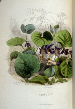 Violette, plate opposite p. 127 in the book, Les Fleurs animées (Paris: Garnier Frères, undated)
