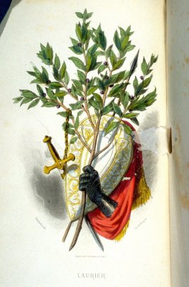 Laurier, first of two plates opposite p. 157 in the book, Les Fleurs animées (Paris: Garnier Frères, undated)