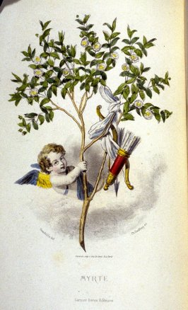 Myrte, second of two plates opposite p. 157 in the book, Les Fleurs animées (Paris: Garnier Frères, undated)