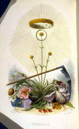 Immortelle, plate opposite p. 189 in the book, Les Fleurs animées (Paris: Garnier Frères, undated)