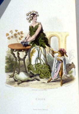 Ciguë, plate opposite p. 273 in the book, Les Fleurs animées (Paris: Garnier Frères, undated)