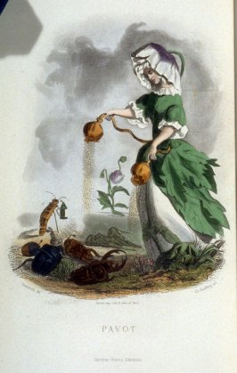 Pavot, plate opposite p. 305 in the book, Les Fleurs animées (Paris: Garnier Frères, undated)