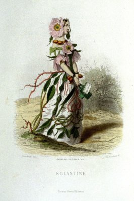 Églantine, plate opposite p. 321 in the book, Les Fleurs animées (Paris: Garnier Frères, undated)