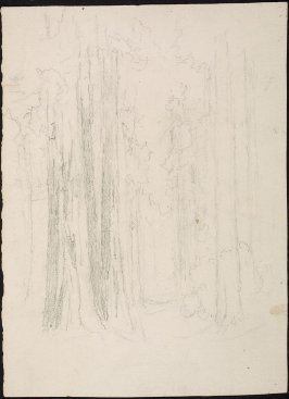 Sketch of Redwood trees