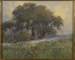 California Oak and Wild Flowers