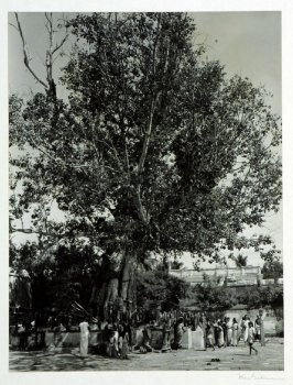 In a temple court of South India, a sacred tree with snake-stones where floral offerings are made for protection against fatal snake-bite.