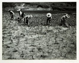 "Yunnanese peasant women hoeing a field. China's earth is still cultivated according to archaic methods. Most of the ""lighter"" farm work is performed by women."