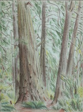 (Untitled) Forest Scene