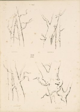 Illustration 2 in the book Lessons on Trees (London: David Bogue, 1850)