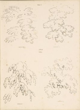 Illustration 3 in the book Lessons on Trees (London: David Bogue, 1850)