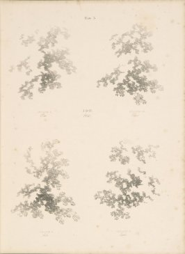 Illustration 4 in the book Lessons on Trees (London: David Bogue, 1850)