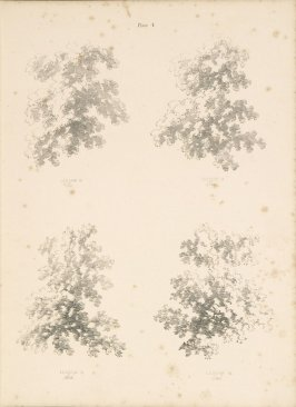 Illustration 5 in the book Lessons on Trees (London: David Bogue, 1850)
