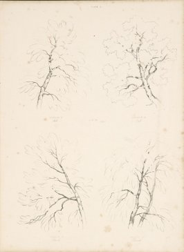 Plate 6 (Lessons 21-24) in the book Lessons on Trees (London: David Bogue, 1850)