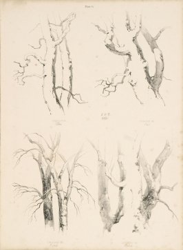 Illustration 7 in the book Lessons on Trees (London: David Bogue, 1850)