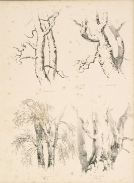 Illustration 8 in the book Lessons on Trees (London: David Bogue, 1850)