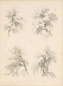 Illustration 9 in the book Lessons on Trees (London: David Bogue, 1850)