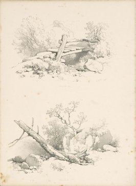 Illustration 18 in the book Lessons on Trees (London: David Bogue, 1850)