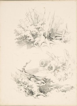 Illustration 19 in the book Lessons on Trees (London: David Bogue, 1850)