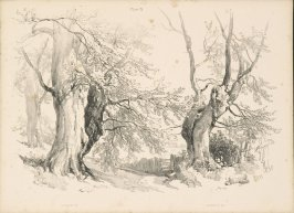 Illustration 22 in the book Lessons on Trees (London: David Bogue, 1850)