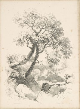 Illustration 25 in the book Lessons on Trees (London: David Bogue, 1850)