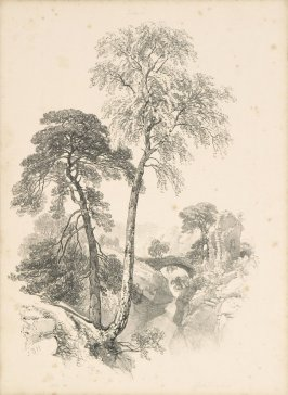 Illustration 26 in the book Lessons on Trees (London: David Bogue, 1850)