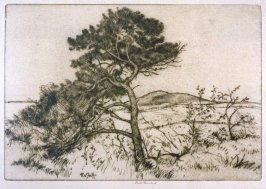 The Little Pine (Landscape)