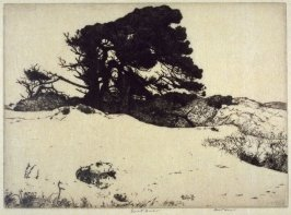 Pines and White Sand