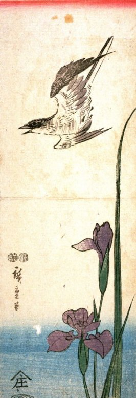 Untitled (Cuckoo and Iris)