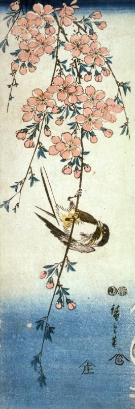 Untitled (Small Bird on Trailing Cherry Branch)