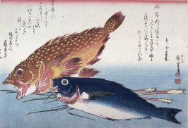 Untitled (Kasago, Isaki, and Ginger?),one of ten from an untitled series of fish