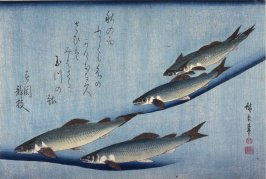 Untitled (Five Swimming Ayu),one of ten from an untitled series of fish