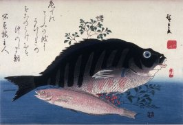 Untitled (Shimadai, Ainame, and Nandina), one from a series of large fish
