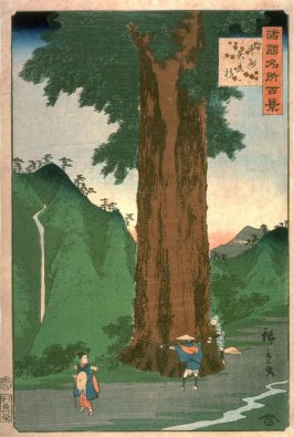 Yatate Cryptomeria Tree in Kai Province (Koshu yatate sugi), from the series One Hundred Famous Places in the Provinces (Shokoku meisho hyakkei)