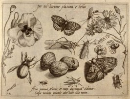 per tal Variare Natura e bella, plate 12 in pt. 2 of the book, Archetypa studiaque patris… (Frankfurt: n. p., [15]92), parts 1-4 in 1 vol.