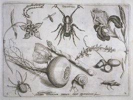 Tarantula, plate 4 in pt. 2 of the book, Archetypa studiaque patris… (Frankfurt: n. p., [15]92), parts 1-4 in 1 vol.