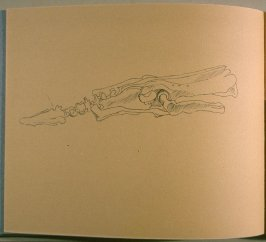 Skeleton, thirty-first image from Travel Sketchbook of Antarctica