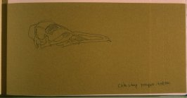 Chin Strap Penguin Skeleton, thirty-second image from Travel Sketchbook of Antarctica