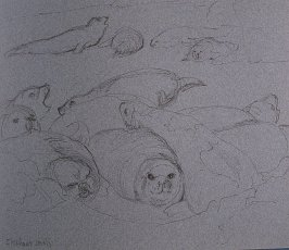 Elephant Seals, forty-fourth image from Travel Sketchbook of Antarctica