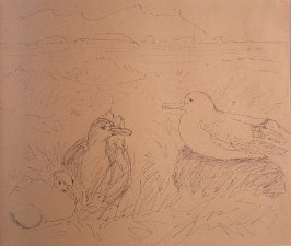 Wandering Albatross, sixty-sixth image from Travel Sketchbook of Antarctica