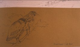 Black Crowned Night Heron, seventy-first image from Travel Sketchbook of Antarctica
