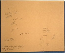 Study of Bird Beaks and Other Details, seventy-eighth image from Travel Sketchbook of Antarctica