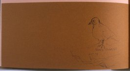 Snowy Sheath Bill, thirty-fifth image from Travel Sketchbook of Antarctica