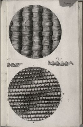 Scheme III, second plate, opposite page 6 in the book, Micrographia: or some physiological Descriptions of minute Bodies made by Magnifying Glasses. With Observations and Inquiries thereupon (London: printed by Jo. Martyn and Ja. Allestry, printers to the