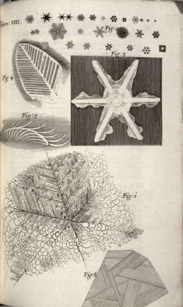 Scheme VIII, eighth plate, opposite page 88 in the book, Micrographia: or some physiological Descriptions of minute Bodies made by Magnifying Glasses. With Observations and Inquiries thereupon (London: printed by Jo. Martyn and Ja. Allestry, printers to t