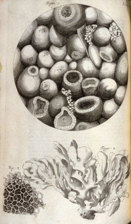 Scheme IX, ninth plate, opposite page 93 in the book, Micrographia: or some physiological Descriptions of minute Bodies made by Magnifying Glasses. With Observations and Inquiries thereupon (London: printed by Jo. Martyn and Ja. Allestry, printers to the