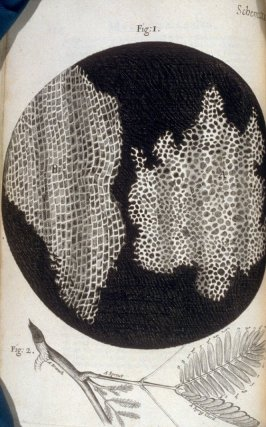 Scheme XI, twelfth plate, opposite page 115 in the book, Micrographia: or some physiological Descriptions of minute Bodies made by Magnifying Glasses. With Observations and Inquiries thereupon (London: printed by Jo. Martyn and Ja. Allestry, printers to t