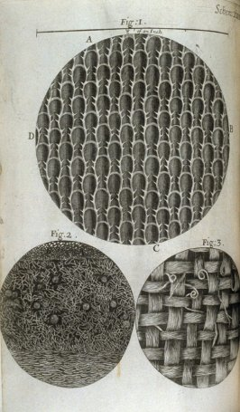 Scheme XIIII [XIV], fifteenth plate, opposite page 141 in the book, Micrographia: or some physiological Descriptions of minute Bodies made by Magnifying Glasses. With Observations and Inquiries thereupon (London: printed by Jo. Martyn and Ja. Allestry, pr