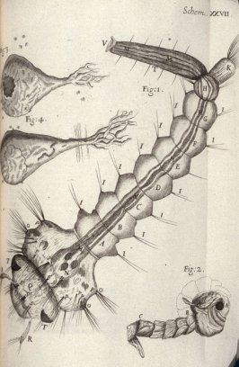Scheme XXVII, twenty-seventh plate, opposite page 186 in the book, Micrographia: or some physiological Descriptions of minute Bodies made by Magnifying Glasses. With Observations and Inquiries thereupon (London: printed by Jo. Martyn and Ja. Allestry, pri