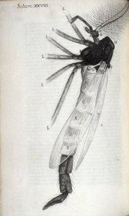 Scheme XXVIII, twenty-eighth plate, opposite page 193 in the book, Micrographia: or some physiological Descriptions of minute Bodies made by Magnifying Glasses. With Observations and Inquiries thereupon (London: printed by Jo. Martyn and Ja. Allestry, pri